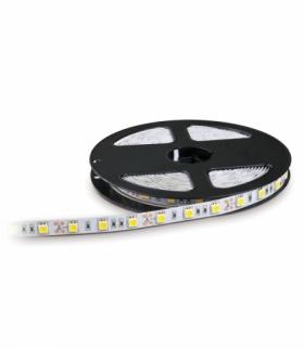 Taśma LED TRAMO 300 diod 5050 IP20 barwa ZIMNOBIAŁA 5m KOBI LIGHT KB3005ZB